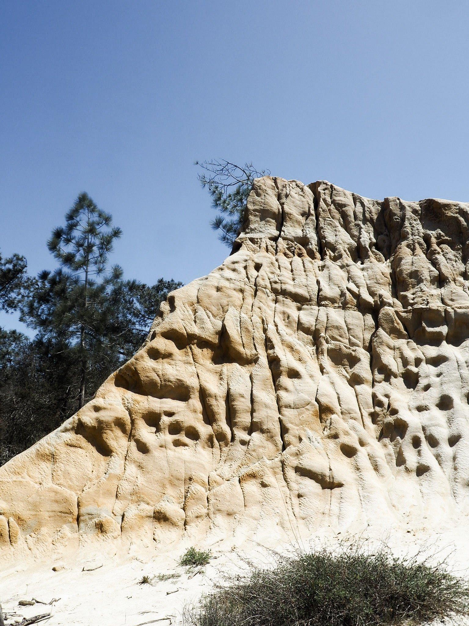 Torrey-Pines