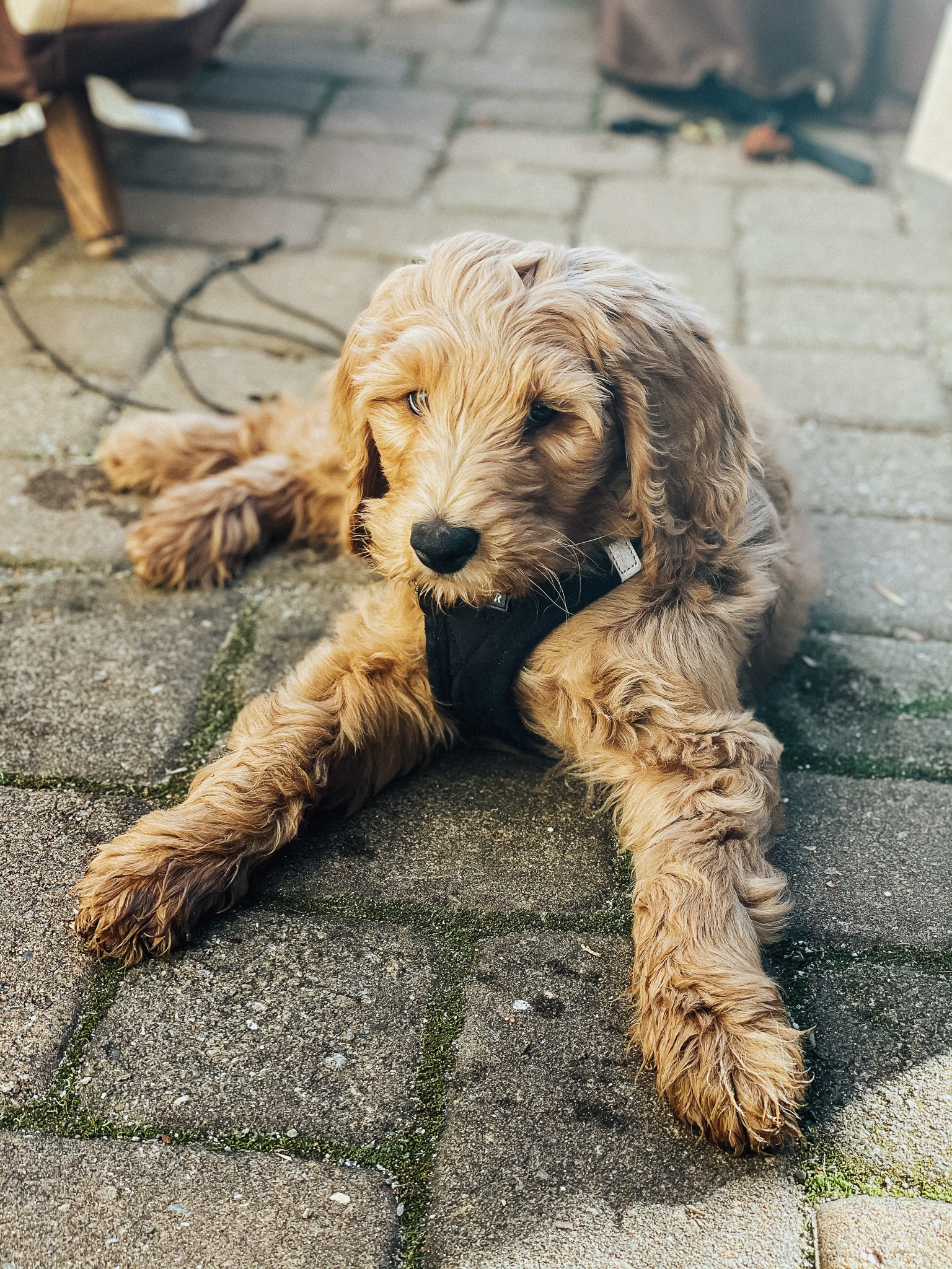 Got the puppy blues? The good news is you aren't alone. Check out these tips and tricks for surviving puppy parenthood.