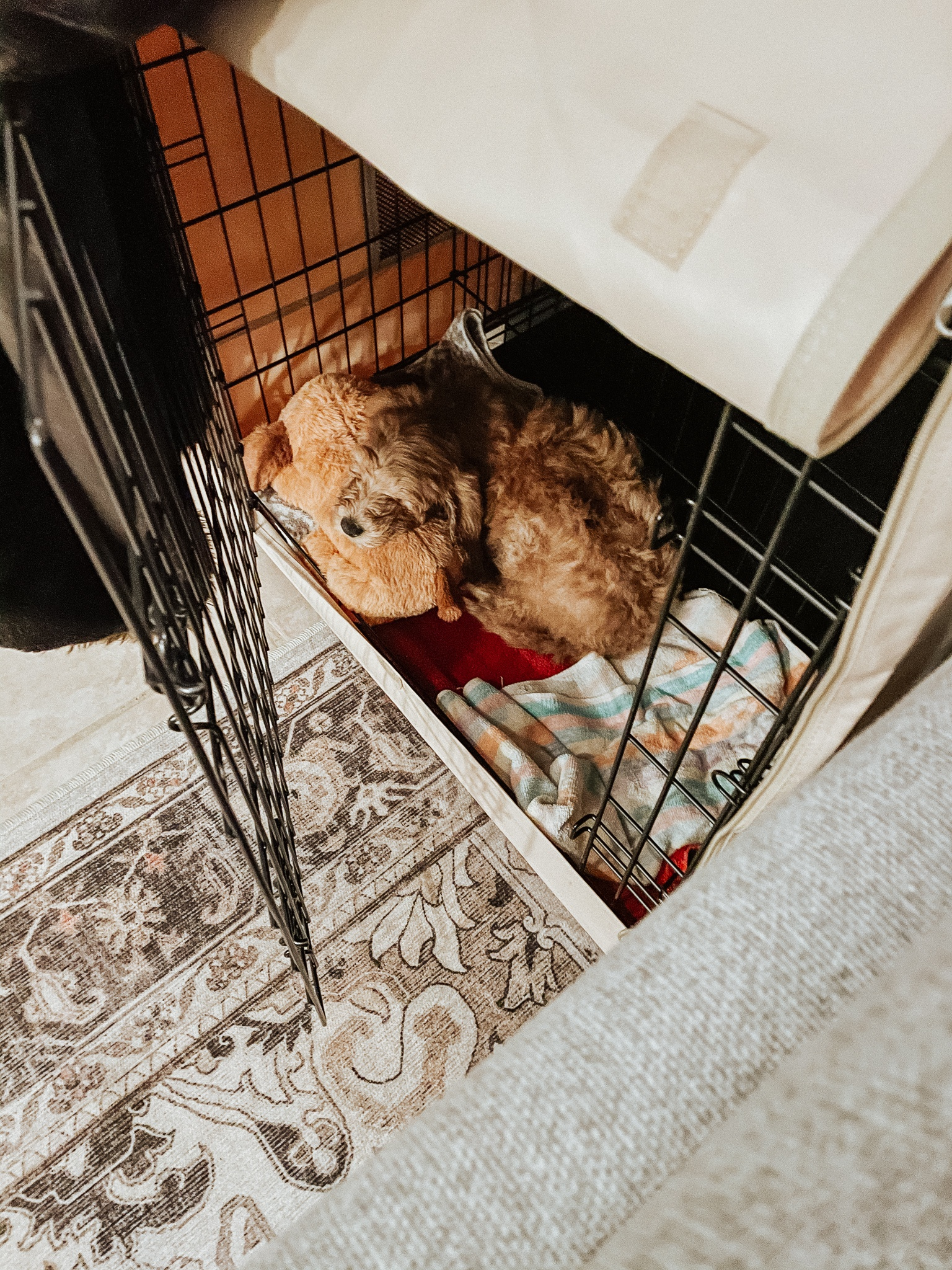Learn how to crate train a puppy to actually enjoy their crate & sleep through the night in this blog post from Kelsey of Blondes & Bagels!