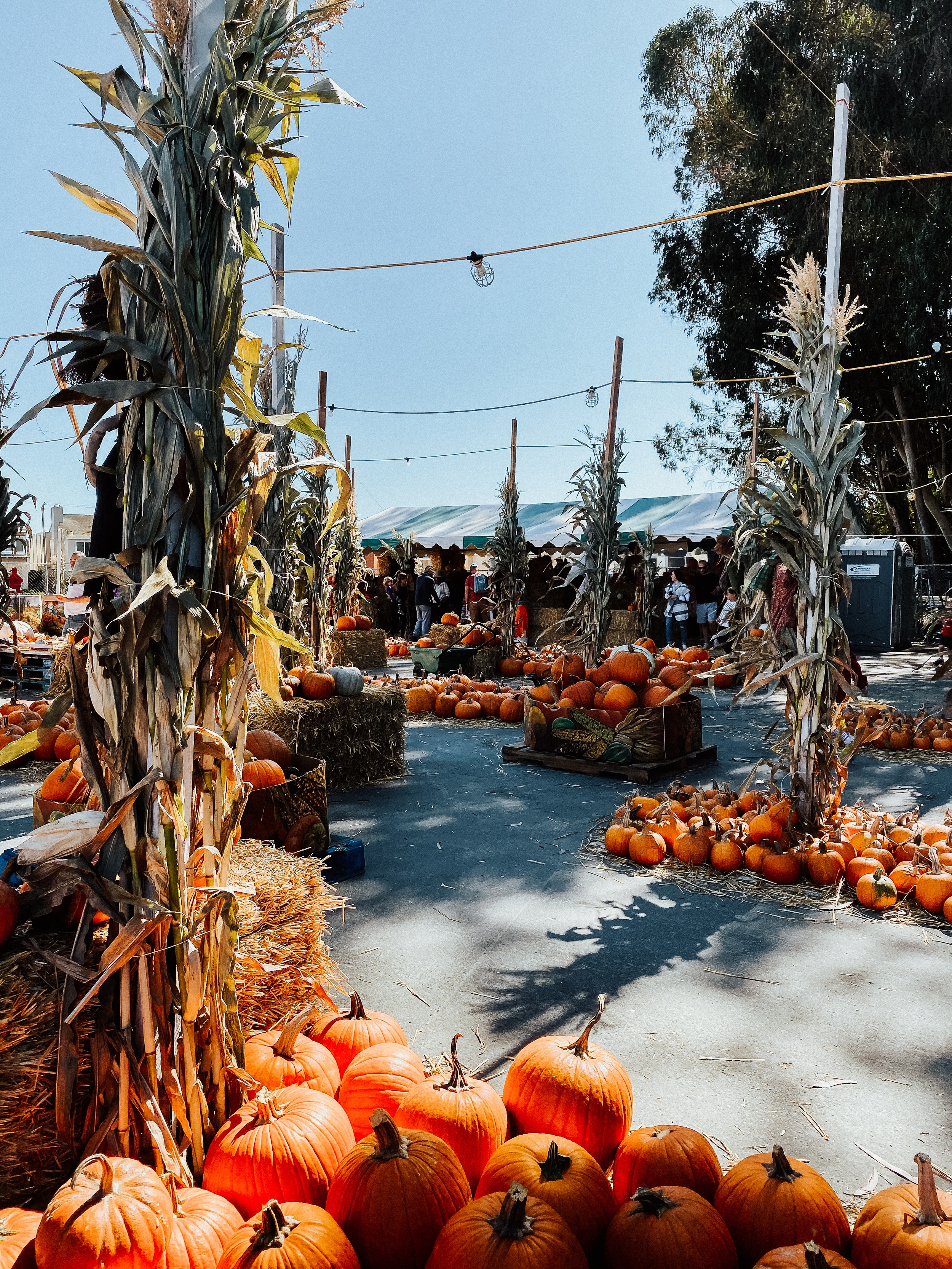 Kick off harvest season and early fall with this bucket list of the best autumnal activities to get in the seasonal spirit.