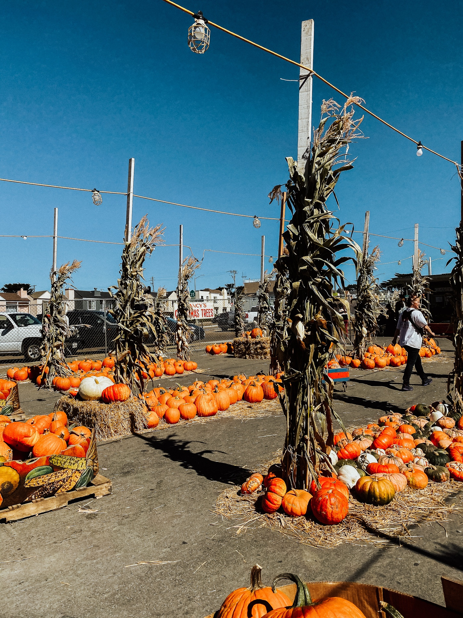 It's pumpkin patch season! Plan the perfect visit to a pumpkin patch near you with these easy tips and tricks!